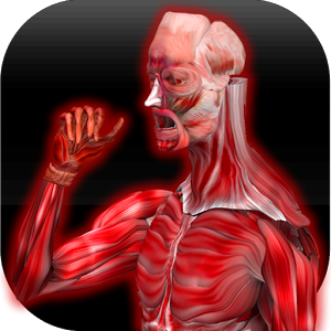 Anatomy Muscles Android