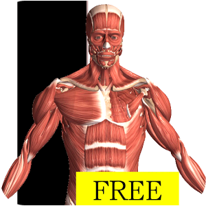 Visual Anatomy Free Android
