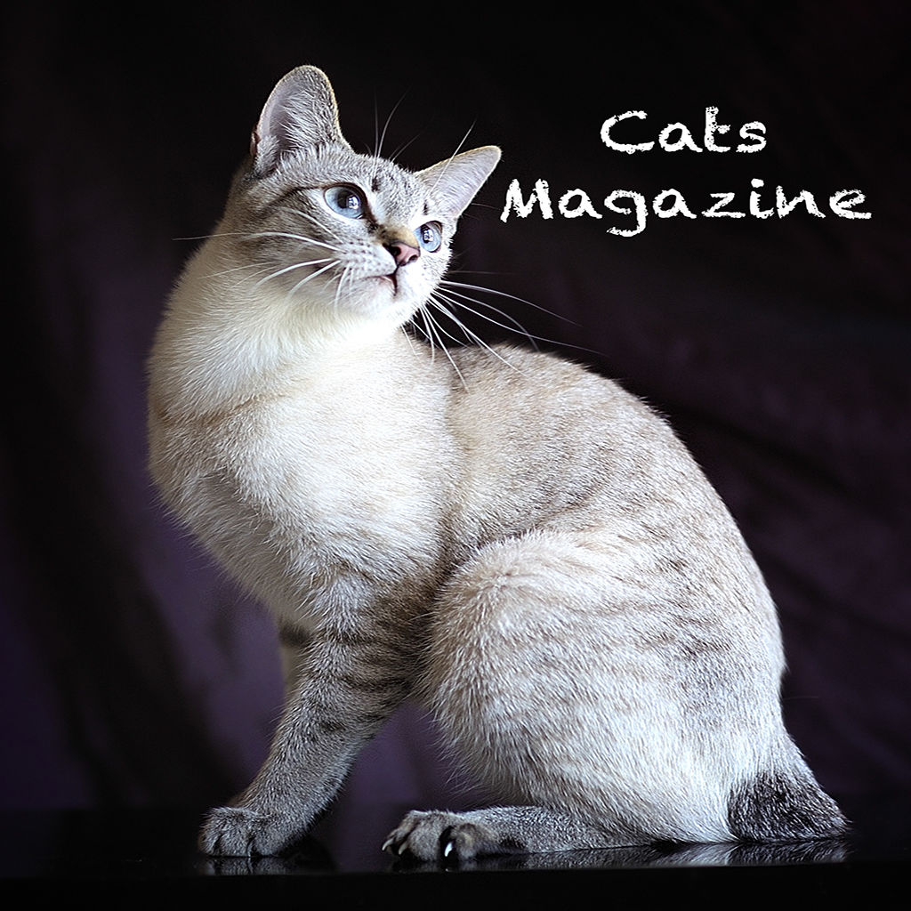 Cats Magazine Ios