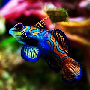 3D colorful fish Android